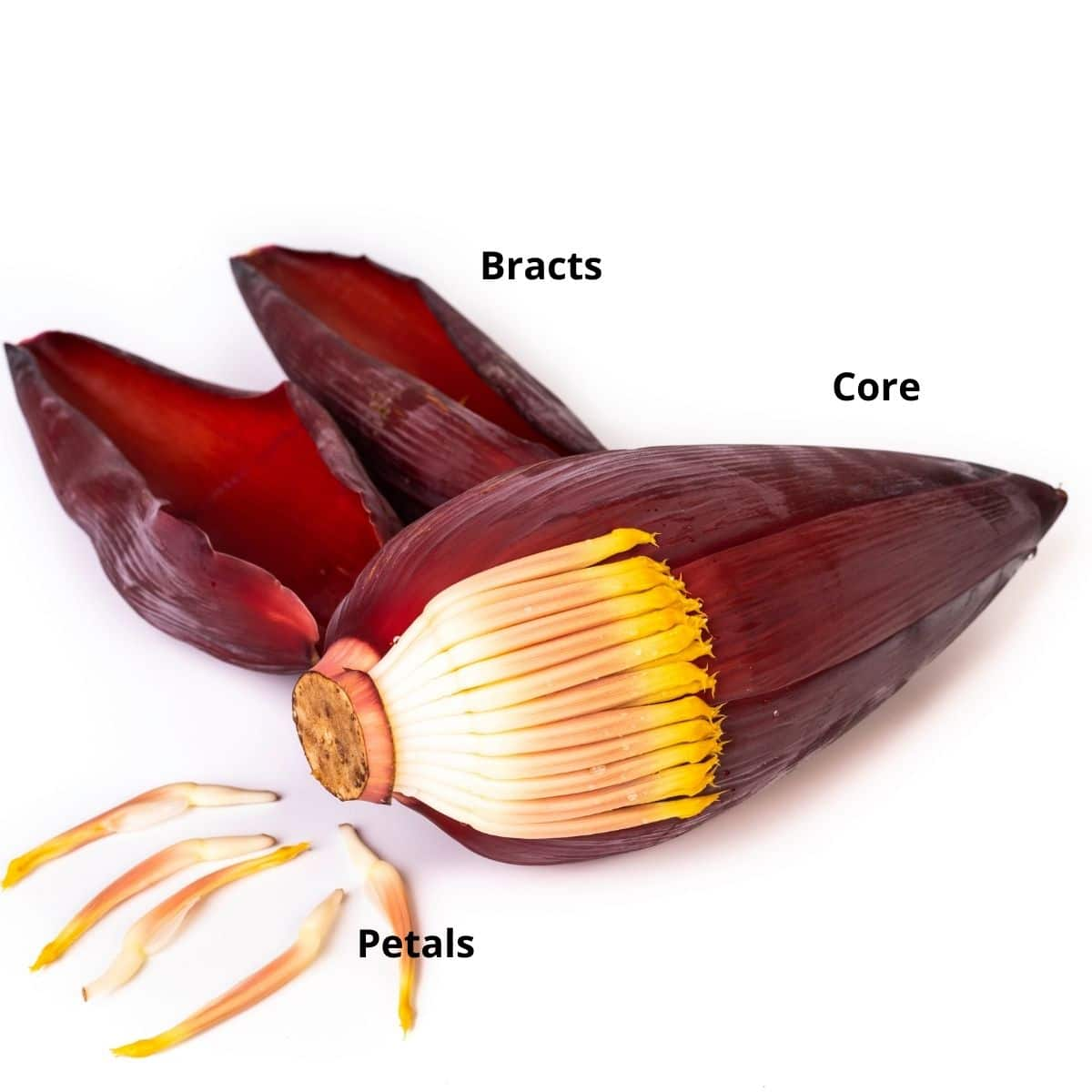 A banana flower is on the white surface with petals on the floor